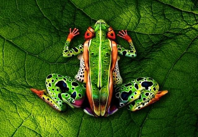 illusion grenouille