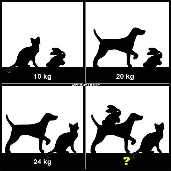 chien chat lapin balance
