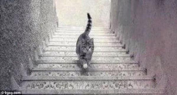 L 39 nigme du chat il monte ou descend les escaliers for Miroir des chats