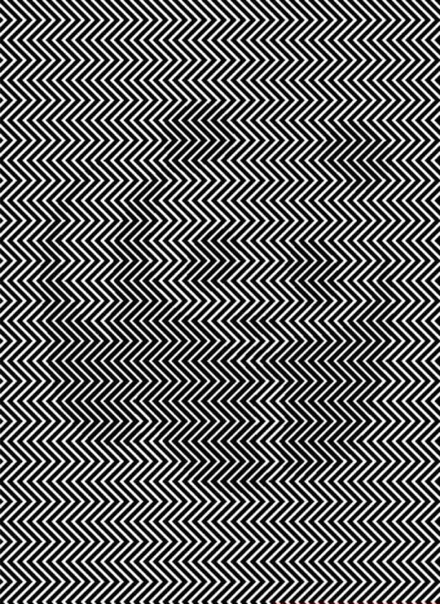 illusion animal caché