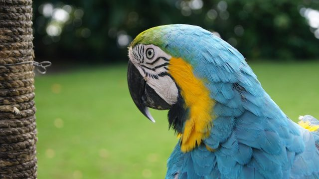 enigme perroquet