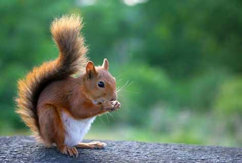 enigme petit ecureuil