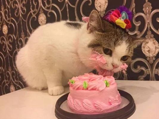 Enigme anniversaire chat