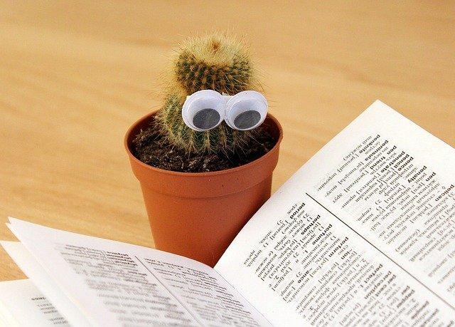 Comble cactus